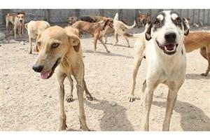پیمانکار خاطی عزل شد/  انتشار فیلم کشتار دلخراش سگها در فضای مجازی