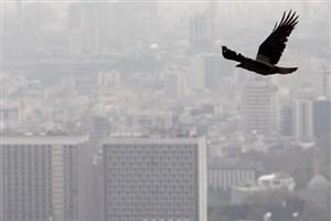 آلودگی هوا در شهرهای بزرگ از چهارشنبه/ اختلاف دمای 40 درجهای ۲ نقطه کشور