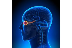 Researchers Stimulate Optic Nerve to Aid the Blind