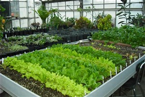 تولیدات گلخانهای زمینه تولید ثروت و اشتغال بالایی در جامعه دارد