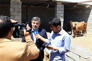 توزیع 4 هزار دام سنگین در سیستان و بلوچستان به همت بنیاد برکت