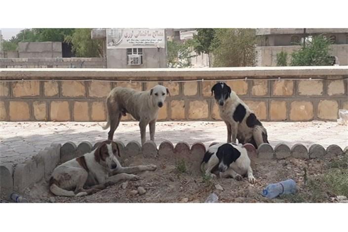 مراکز نگهداری و کنترل جمعیت سگ های بدون صاحب