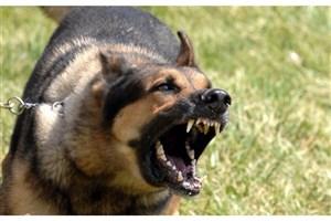 سگی 2  مرد را  در دزاشیب تهران گاز گرفت + جزئیات