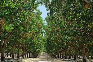 باغ مدرنِ میوه در واحد کرمانشاه ایجاد میشود/ تجهیزات آزمایشگاهی پیشرفته صنعت کشاورزی در دانشگاه