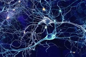 کاشت موفقیتآمیز حافظه مصنوعی در مغز موشها