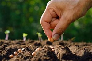 رضایت 84درصدی کشاورزان از بذرهای تولیدی دانشگاه آزاد/ اشتغالزایی برای 50 نفر در یک هکتار تولید بذر