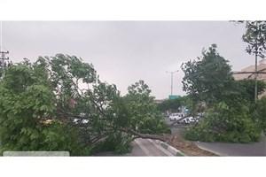 قطعکنندگان درختان الهیه بازداشت شدند