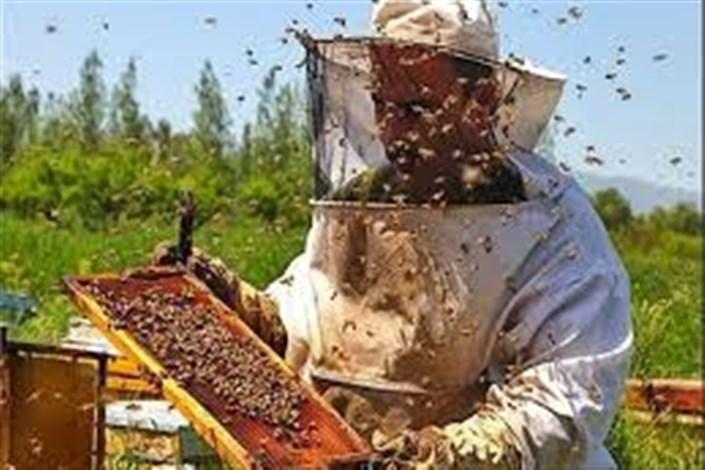 سرشماری زنبورستانهای کشور