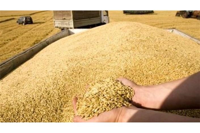 کشاورزان به هیچ عنوان گندم را با خاک قاطی نمیکنند
