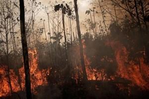 جهان اندازه انگلیس جنگل از دست داد