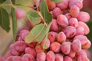 توسعه محصولات باغداری با  ترویج فناوری های نوین و حیاتی