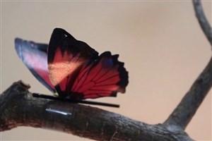 ساخت عضله مصنوعی با استفاده از نانومواد دوبعدی
