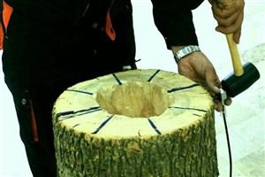 تیم توموگرافی درختان سرپا به شاهینشهر میرود