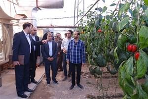 دستیابی دانشگاه آزاد اسلامی به تولید بذر هیبرید گام بزرگی در راستای تحقق اقتصاد مقاومتی است