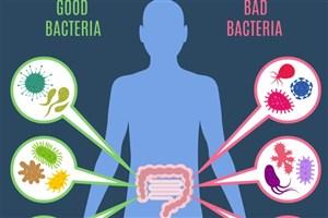 تأثیر آنتی بیوتیک روی باکتری های روده