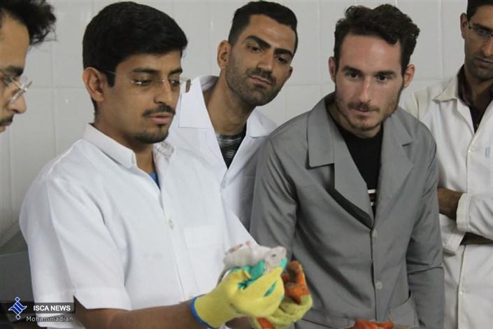 دوره آموزشی تخصصی تکنیک های کار با حیوانات آزمایشگاهی