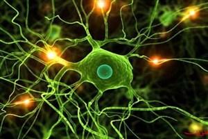 ترمیم قلبهای آسیب دیده با سلولهای ستیغ عصبی