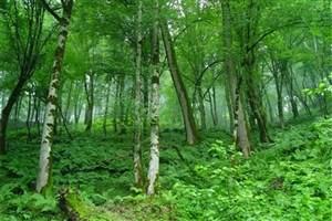 فعالیت مستمر اکیپهای گشت مشترک در جهت حفاظت از منابع طبیعی