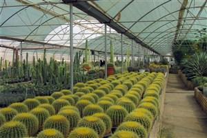 توسعه فعالیتهای دانشگاه آزاد استان گلستان در زمینه گلهای زینتی/ از خودکفایی در تولید بذر تا درآمدزایی 1 میلیارد تومانی