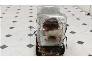 Researchers Train Rats How to Drive