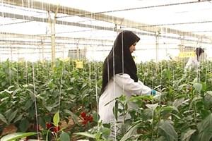 رونق کشاورزی کشور با رویکرد مبتنی بر حل مسأله در دانشگاه آزاد اسلامی/ از تولید بذر تا کشت گندم در مزارع واحدهای مختلف