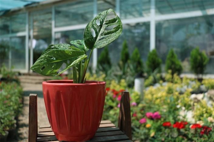 احداث اولین بازار بزرگ گل و گیاه