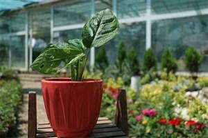 احداث اولین بازار بزرگ گل و گیاه در منطقه 13