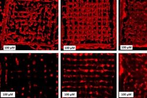 روشی برای کنترل رفتار سلول در داربستهای سهبعدی