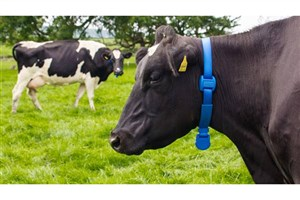 Iranian Researchers Develop IoT Based Animal Health Monitoring Device