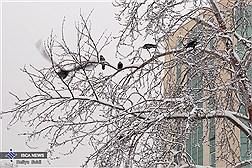 آغاز بارش برف و باران از سه شنبه