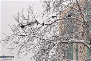 ادامه بارش برف و باران جادهها/ ترافیک سنگین در آزادراه قزوین-کرج