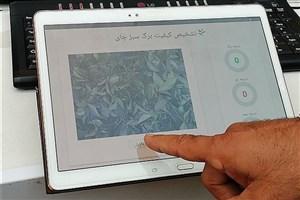 دستگاه کیفیت برگ سبز چای ساخت دانشگاه آزاد اسلامی لاهیجان با موفقیت آزمایش شد