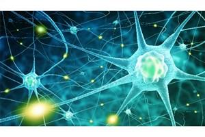 Researchers Discover New Mechanism of Neurodegeneration