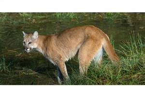 اگر حیوان وحشی در نزدیکی محل زندگیتان دیدید به محیط زیست اطلاع دهید