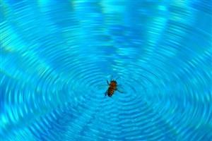 راه زنبورها برای غرق نشدن چیست؟