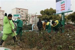 آغاز عملیات کندوکوب ، به زراعی و هرس درختان در  فضای سبز