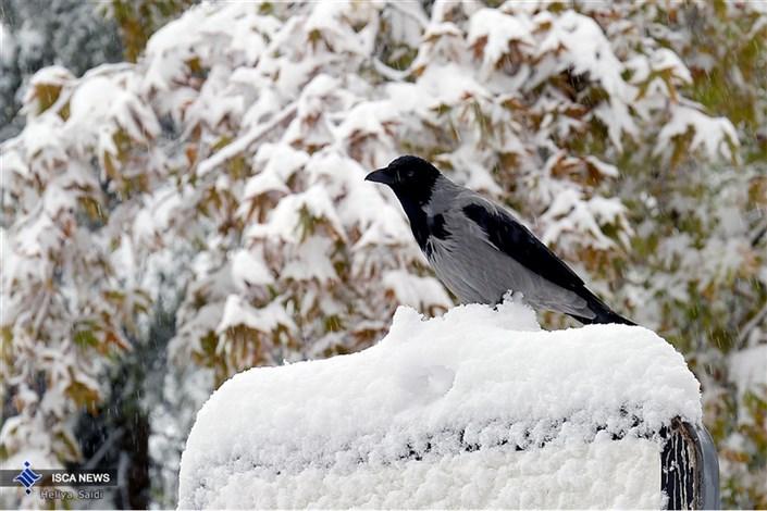 «برف پائیزی» در تهران