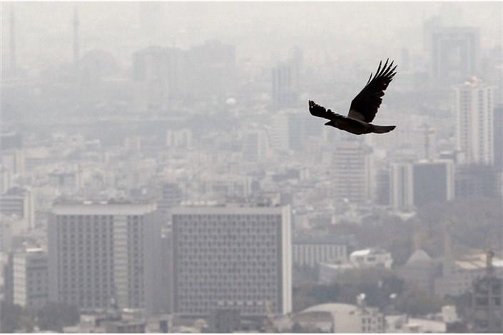 مرگ   به علت آلودگی هوا