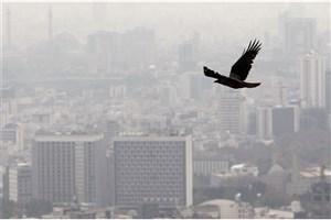 هوای تهران همچنان ناسالم است/گروه های حساس در خانه بمانند
