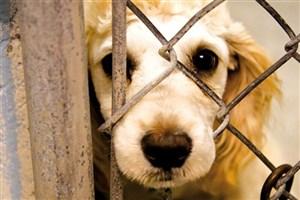 تصویب آموزش ممنوعیت حیوان آزاری در مقطع ابتدایی در کمیسیون آموزش