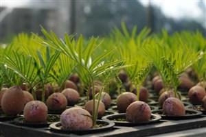 تیشهای که بر ریشه گیاهان زینتی زده میشود/ وارداتِ بذر کاکتوس باوجود خودکفایی در تولید داخلی