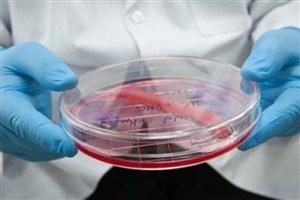 تکثیر سلولهای پیشساز قلبی عروقی در محیط مناسب