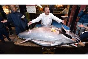 رستوران ژاپنی 23 میلیارد تومان برای یک ماهی تن باله آبی پول داد