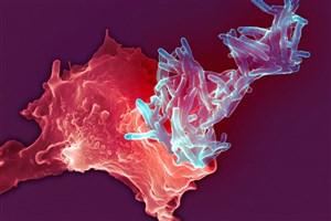 ارائه ترفندی برای تاثیرگذاری بیشتر واکسن سل