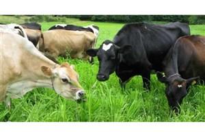 عرضه 2 میلیون تُن شیر در زمستان 98