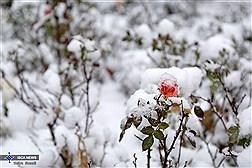 Winter Snowfall in Tehran/ in Photos