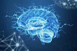 خزیدن ربات کرم شکل در مغز