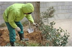 اجرای طرح فراگیر کاشت نهال در منازل شهروندان