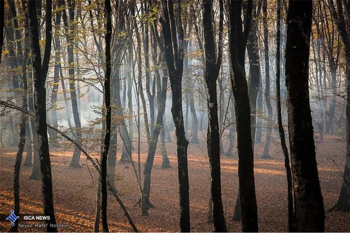 جنگل  النگدره در روزها آخر پاییز