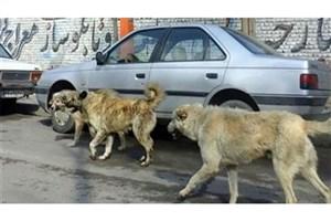 توضیحات شهرداری درباره حمله سگ ولگرد به دختر 7 ساله